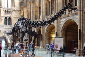 Музей естествознания и науки в Лондоне