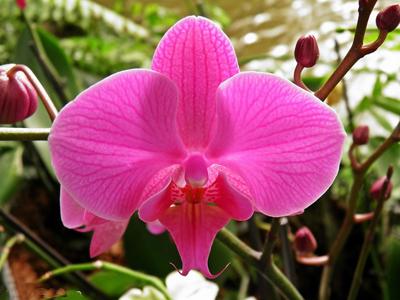 Парк орхидей Утопия